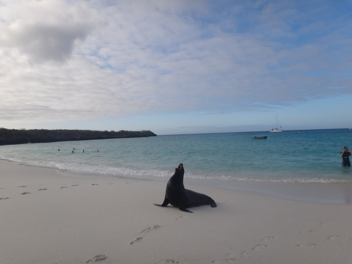 Top 5 things to see in the Galapagos Islands,Ecuador