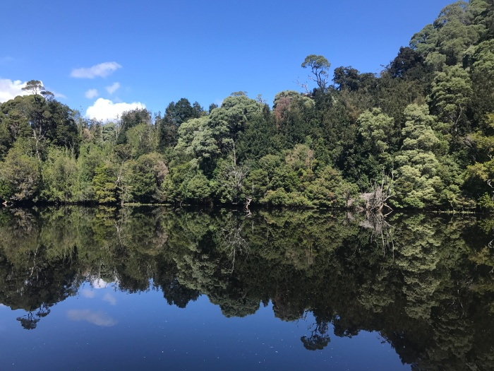 Top 5 short walks in the Tarkine,Tasmania