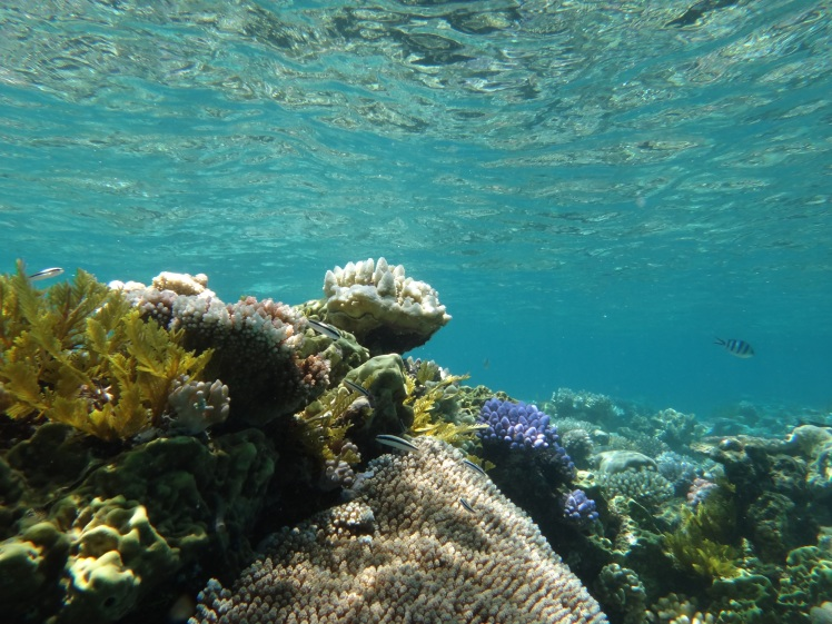 Outer Agincourt, Great Barrier Reef