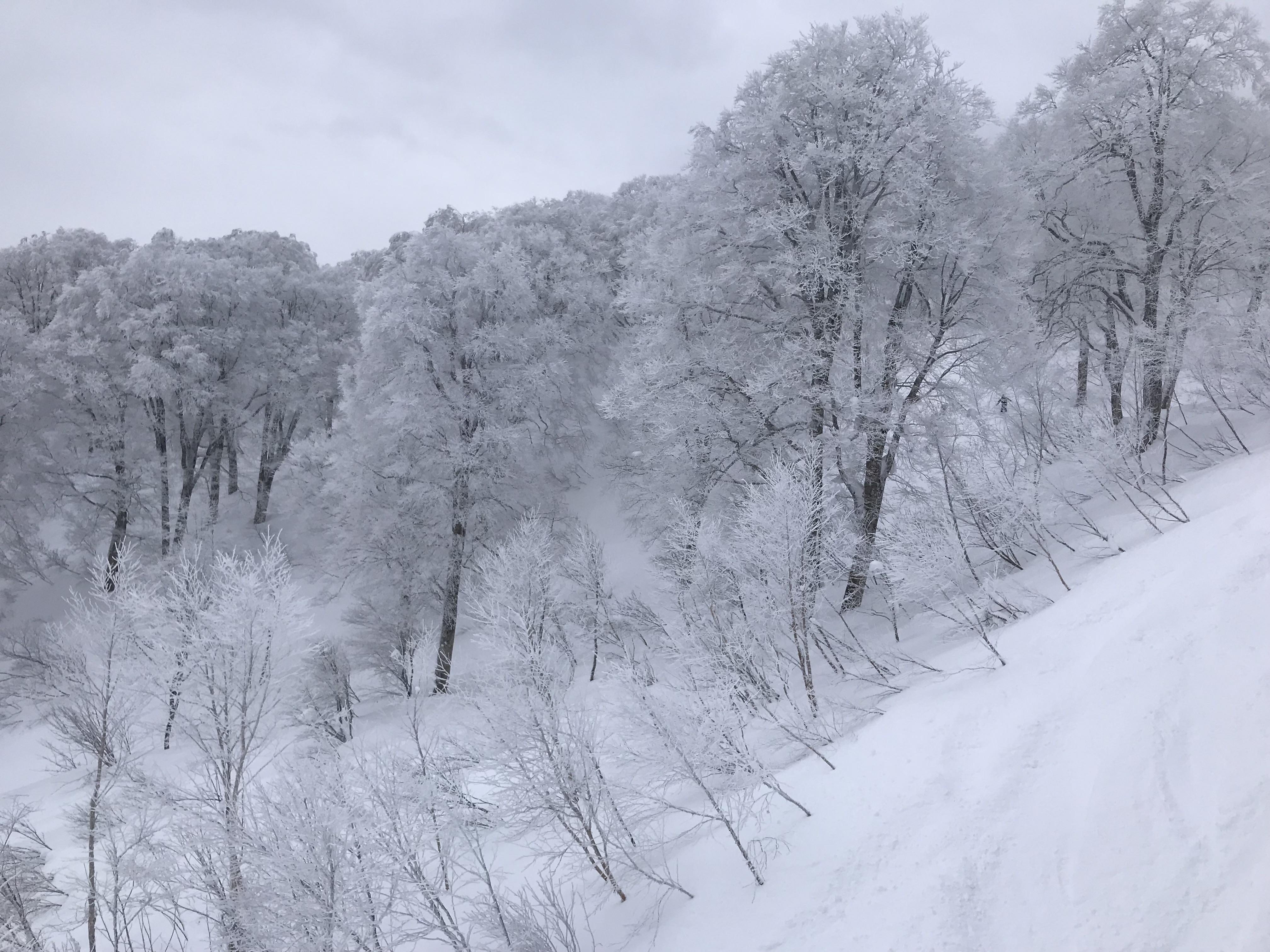 Pine Tree Snow Japan