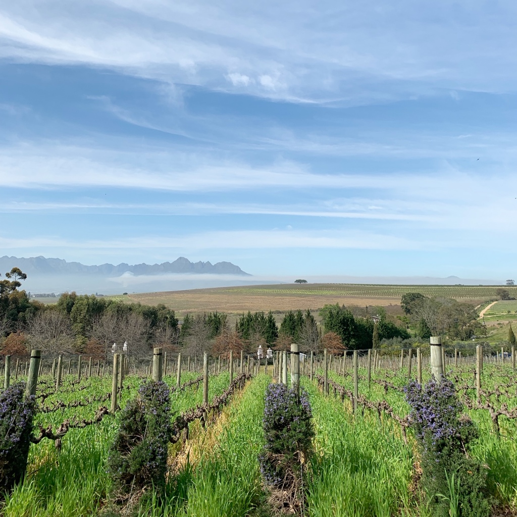 Winery South Africa